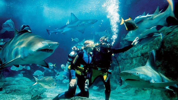 Lặn cùng cá mập tại Thủy cung Sea Life Melbourne